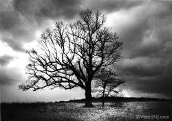 weird-nj-devils-tree